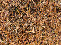Ameisenhaufen Stockfoto