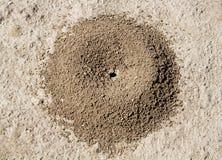 Ameisenhaufen lizenzfreie stockfotos