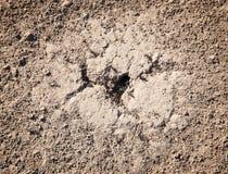Ameisenhaufen Stockfotografie
