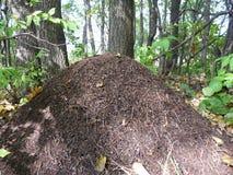 Ameisenhaufen Lizenzfreies Stockbild