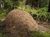 Ameisenhaufen Lizenzfreies Stockfoto