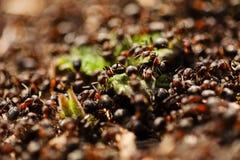 Ameisenhaufen auf dem Gras stockfoto