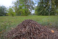 Ameisenhaufen in der Bewegung stockfoto