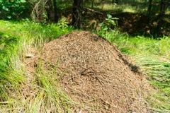 Ameisenhaufen in der Waldgroßen Kolonie von Ameisen stockfotos