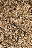 Ameisenhaufen in der Waldgroßen Kolonie von Ameisen lizenzfreies stockbild