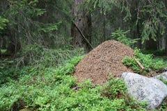 Ameisenhaufen im moutain Wald (DOLOMITI) Lizenzfreies Stockbild