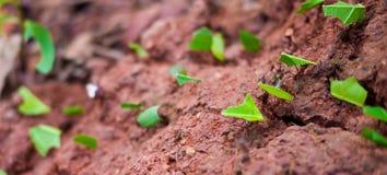Ameisenmarschieren lizenzfreies stockbild