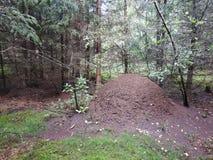 Ameisennest im Wald Lizenzfreie Stockbilder