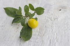 Ameixa amarela Fotos de Stock