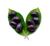 Ameixa de Jambolan, ameixa de Java & x28; Cumini& x29 do Syzygium; Fotos de Stock