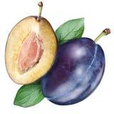 Ameixa e metade do fruto em um whiite fotos de stock