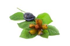 A ameixa em um ramo gosta de uma flor Fotografia de Stock
