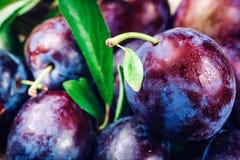 Ameixa ameixa fresca outono da colheita do outono da colheita Ameixas azuis Ameixa amarela Ameixas frescas em uma superfície de m Fotografia de Stock Royalty Free