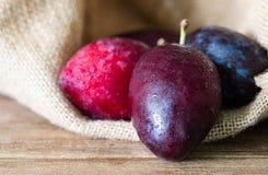 Ameixa seca fresca suculenta na tabela de madeira com as ameixas secas no fundo do saco do saco de gunny Imagem de Stock Royalty Free