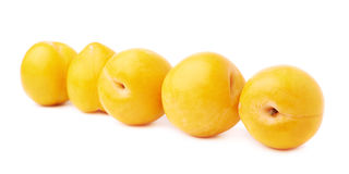 Ameixas amarelas alinhadas isoladas Foto de Stock Royalty Free