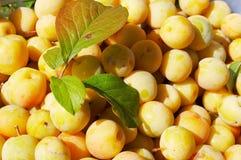 Ameixas amarelas com folhas Fotografia de Stock Royalty Free
