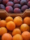 Ameixas amarelas e vermelhas Fotos de Stock
