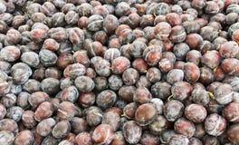Ameixas da ameixa seca no indicador Foto de Stock