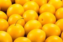 Ameixas de cereja amarelas Imagens de Stock