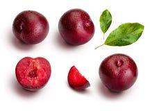 Ameixas dos ângulos diferentes e folhas isoladas no fundo branco Ameixas vermelhas apetitosas e saudáveis fotografia de stock