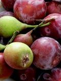 Ameixas e peras vermelhas de St John Fotos de Stock