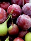 Ameixas e peras vermelhas de St John Foto de Stock