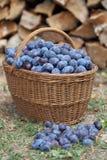 Ameixas em uma cesta Fotos de Stock Royalty Free