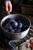 Ameixas em uma concha Foto de Stock Royalty Free
