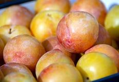Ameixas frescas amarelas Mirabelle Stack na venda no sol Fundo imagem de stock