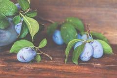 Ameixas frescas com as folhas verdes na tabela de madeira escura raso Fotos de Stock Royalty Free