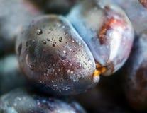 Ameixas maduras Foto de Stock Royalty Free