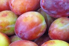 Ameixas maduras do fruto do alimento fotografia de stock