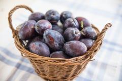 Ameixas maduras frescas Imagem de Stock Royalty Free