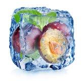 Ameixas no cubo de gelo Fotos de Stock Royalty Free