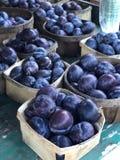 Ameixas orgânicas recentemente escolhidas fotografia de stock royalty free