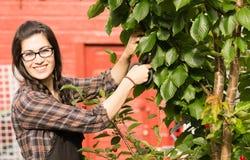 Ameixas secas de sorriso Cherry Tree Backyard Fruit da mulher bonita Fotografia de Stock Royalty Free