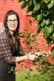 Ameixas secas de sorriso Cherry Tree Backyard Fruit da mulher bonita Fotos de Stock