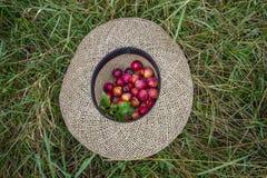 Ameixas secas do vermelho em um chapéu de palha fotos de stock