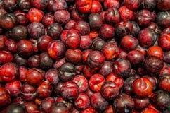 Ameixas vermelhas Fotografia de Stock Royalty Free