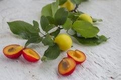 Ameixas vermelhas e amarelas Foto de Stock Royalty Free