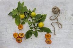 Ameixas vermelhas e amarelas Imagens de Stock