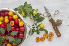 Ameixas vermelhas e amarelas Fotos de Stock