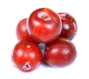 Ameixas vermelhas maduras Fotografia de Stock Royalty Free
