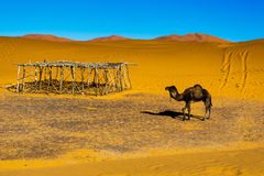 Amel Марокко ¡ пустыни Сахары Ð, Merzouga Стоковая Фотография RF
