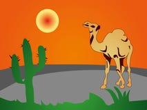 Сamel pustyni kaktus Zdjęcie Stock