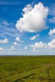 ameland łąki Zdjęcia Royalty Free