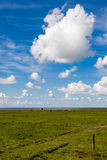 Ameland meadow Royalty Free Stock Photos