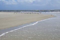 The Amelia Island, Fernandina Beach, Florida, USA. The Amelia Island Florida, Fernandina Beach is occupied by wild birds, Florida, USA royalty free stock photo