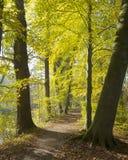 Amelisweerd automnal de forêt près de la ville néerlandaise d'Utrecht Photos libres de droits