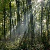 Amelisweerd automnal de forêt près de la ville néerlandaise d'Utrecht Images stock